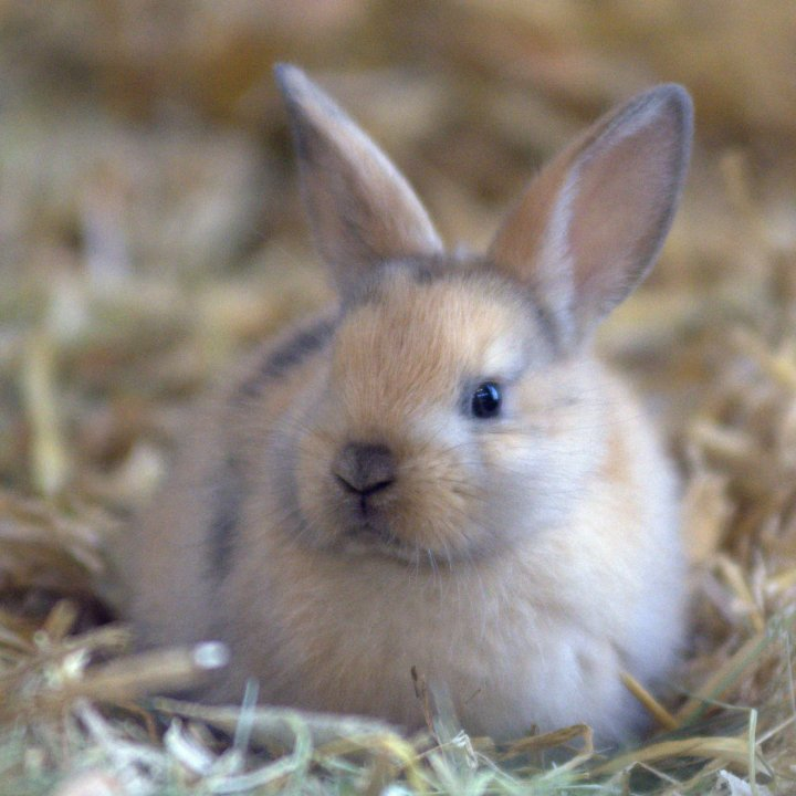 Kaninchen | Tierschutzverein Gross-Essen e.V.